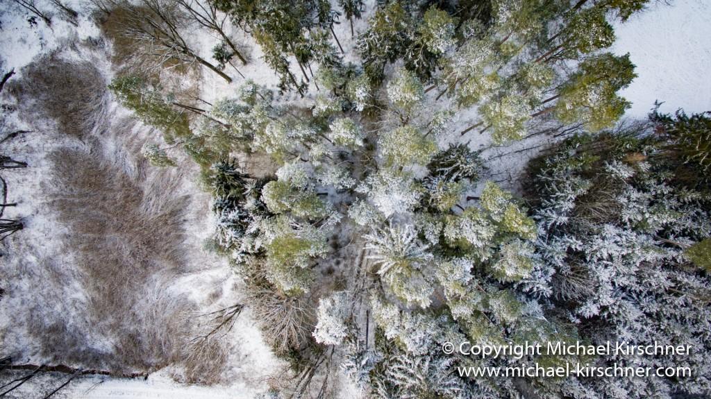 Schnee bis in die Baumspitzen